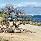 Lone Tree by Teresa Zieba