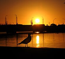 Port Adelaide by Critical  Vision