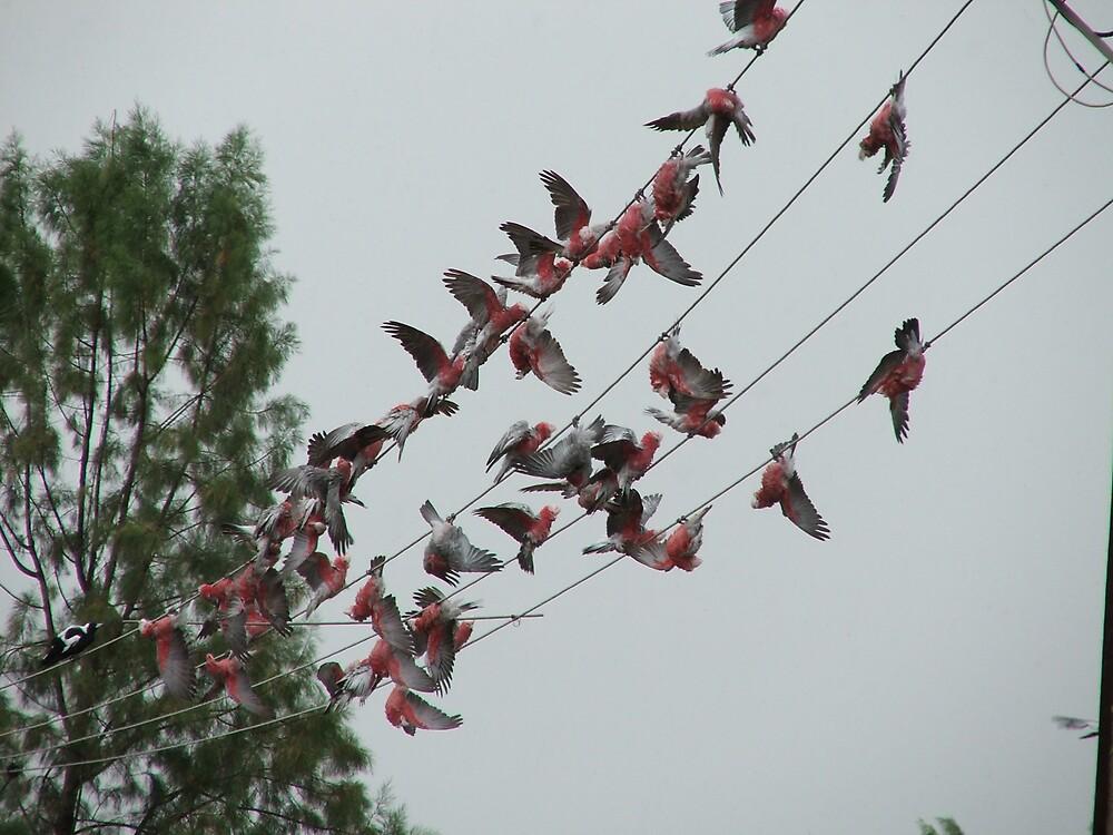 Singin' in the Rain by Mary  Galea
