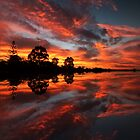 Reflected Glory by Julia Harwood
