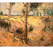 'Trees in a Field on a Sunny Day' by Vincent Van Gogh (Reproduction) Photographic Print