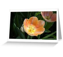 APRICOT TULIP Greeting Card