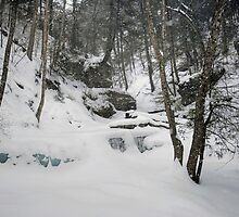 Fresh Snow Falls On Delaware Falls by Gene Walls