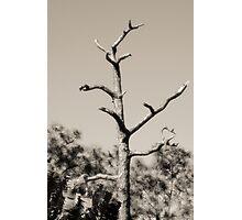 Leafless Photographic Print