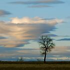 Lenticular Cloud by Pamela Hubbard