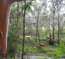 Cows in the background across the rocky stream by Marilyn Baldey