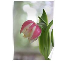 Tired Tulip Poster