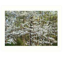 Flowering Dogwood Art Print