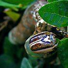 Caterpillar 3 by Guy Tschiderer