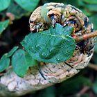 Caterpillar 2 by Guy Tschiderer