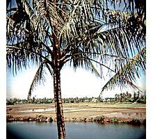 Hoi An palms Vietnam Photographic Print