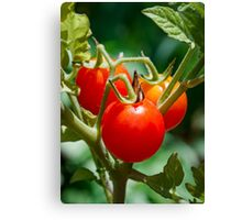 Cherry Tomatoes on the Vine Canvas Print