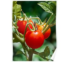 Cherry Tomatoes on the Vine Poster