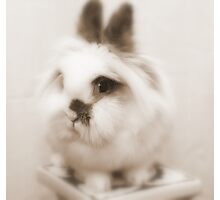 Bunny model Photographic Print