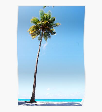 The coconut palm Poster
