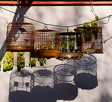 Birds on a string by dotweb