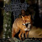 Fox on the wall by dotweb