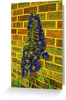 Blue Flower by Trevor Kersley