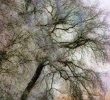 Pastel Frost by Ann Garrett