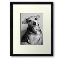 Please be upstanding... Framed Print