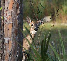 Peek-A-Boo......... by PrairieRose