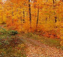Mandan fall colors by jrier