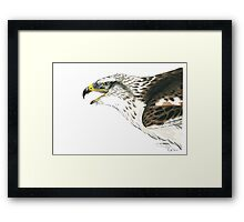 Bond, A Ferruginous Hawk Framed Print