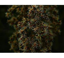 Macro Plant Life Photographic Print
