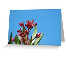 Oleander Buds Greeting Card