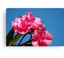 Deadly Pink Canvas Print