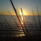 Sea View by nikki harrison