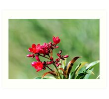 SOLVED by TriciaMarie in 4 Guesses - Jatropha Art Print
