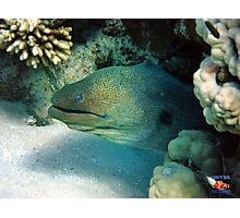 Moray Eel Sharm Egypt Photographic Print