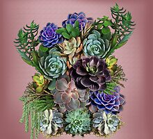 My Succulent garden by NadineMay