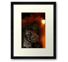 Red Poodle Framed Print