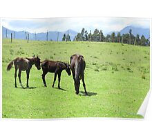 Mare and Colts on a Hill Poster