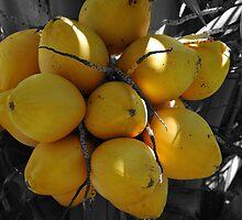 Coconuts by Donna Adamski