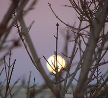Air a Zona Moon Scape by Kimberly Miller