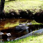 Stream Side Grass (Reflected) by Chris Gudger