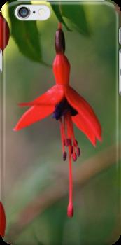 Fuchsia - iPhone by George Row