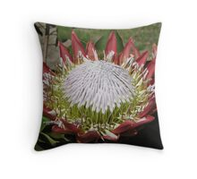 Protea cynaroides Throw Pillow