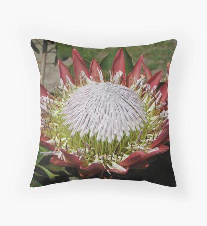 Protea cynaroides Throw Pillow