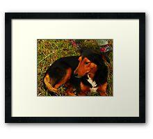 Peaceful Dog Framed Print