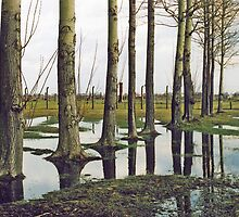 Birkenau - Tree - Reflection  by Carl Gaynor