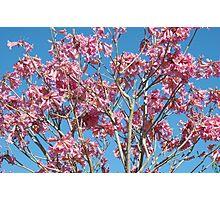 Trumpet Tree Photographic Print