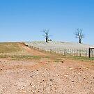 Summer Paddocks. South-West  NSW, Australia by Adrian Paul