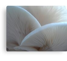 Oyster Mushrooms Metal Print