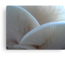 Oyster Mushrooms Canvas Print