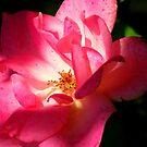 Bright Pink  by Cricket Jones