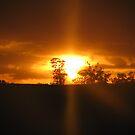 Sunset  by Melissa Nash